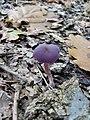 Mushroom (1467430447).jpg