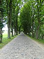Mustin Gepflasterte Allee 2011-05-24 115.JPG