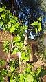 My garden 2.jpg