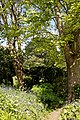 Myddelton House, Enfield, London ~ pathway through trees and shrubs 02.jpg
