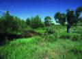 NRCSCO01020 - Colorado (1431)(NRCS Photo Gallery).jpg