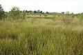 Nationaal park De Groote Peel 12.jpg