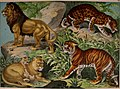 Natural history of the animal kingdom for the use of young people - in three parts, comprising I. Mammalia - II. Birds - Part III. Reptiles, amphibia, fishes, insects, worms, molluscs, zoophytes, &c. (14565753507).jpg