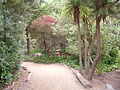 Nature Trail, SF Zoo 3.JPG