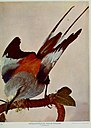 Nature neighbors, embracing birds, plants, animals, minerals, in natural colors by color photography, containing articles by Gerald Alan Abbott, Dr. Albert Schneider, William Kerr Higley...and other (14565472937).jpg