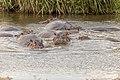 Nature of Ngorongoro Conservation Area (144).jpg