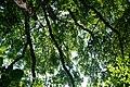 Naturschutzgebiet Haseder Busch - Blick nach oben (2).jpg