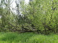 Naturschutzgebiet Heuckenlock 21.05.2014 Phase 61.JPG