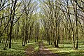 Nekhvoroshcha Volodymyr-Volynskyi Volynska-Nekhvoroshschi nature reserve-view of the central part-2.jpg