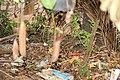 Nepenthes 'Miranda' (49).jpg