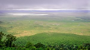 Ngorongoro Conservation Area - View of the crater