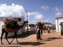 Nomad camels in th galleryfull.jpg