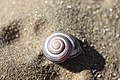 Noordwijk - Gastropoda v4.jpg