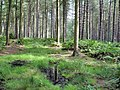 Norley - Delamere Forest - track near the Sandstone Trail - geograph.org.uk - 980139.jpg