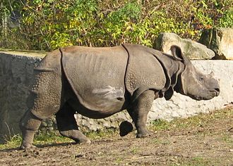 Rhinoceroses in ancient China - Indian rhinoceros extinct in China since 1920