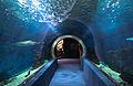 Nyíregyháza Zoo, Aquarium, underground passage.jpg