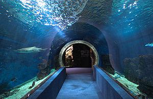 Nyíregyháza Zoo, Aquarium, underground passage