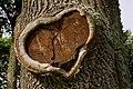 Oak (6063658809).jpg