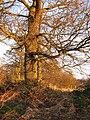 Oakwood, Redgorton - geograph.org.uk - 305592.jpg