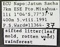 Ochetomyrmex neopolitus psw11364-37 label 1.jpg
