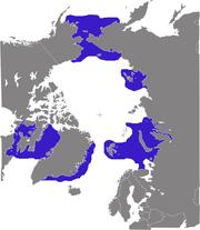 Distribution of Walrus