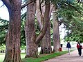 Old Trees in Chenonceau Castle 舍農索城堡老樹 - panoramio.jpg