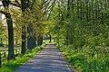 Oldenzaal, Koppelboerweg - panoramio - Frans-Banja Mulder.jpg