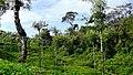 On the way to Akkalamai - panoramio.jpg
