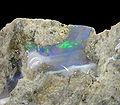 Opal-251114.jpg