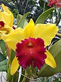 Orchid from Thailand 5.jpg