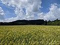Ostaš (700 m) - pohled od jihu, od zeleně značené pěšiny do Police n. M., na pomezí katastru Žďáru a Bukovic (1).jpg