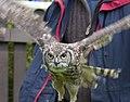 Owl1a (5086530559).jpg