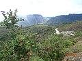 PLANTA DE MOSGAL-JUMBILLA - panoramio.jpg