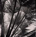 Paolo Monti - Serie fotografica (Elba (isola), 1964) - BEIC 6342468.jpg