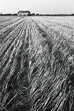 Immagine tipica della campagna ferrarese in un servizio fotografico di Paolo Monti del 1974