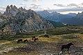 Parco Naturale Tre Cime horses 3.jpg