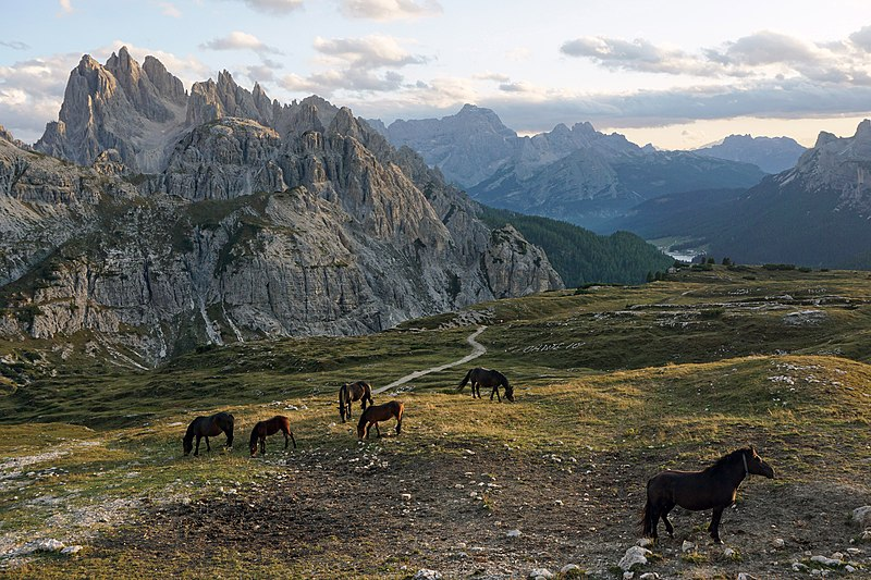 Horses grazing in mountain pasture at Parco Naturale Tre Cime.