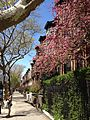 Park Slope in spring, with flowers.JPG