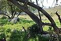 Pastoral dale beneath ancient ruin.jpg