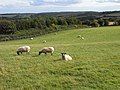 Pasture, Withington - geograph.org.uk - 1557778.jpg