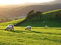 Pastures, Bassenthwaite - geograph.org.uk - 901994.jpg