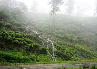 Peermade - Monsoon stream flowing through a tea estate in  Peermade