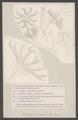 Pentacrinus - Print - Iconographia Zoologica - Special Collections University of Amsterdam - UBAINV0274 007 02 0074.tif