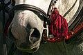 Percherons attelés mondial du cheval percheron 2011Cl J Weber22 (24083445045).jpg
