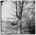Petersburg, Virginia. Damage to garden wall LOC cwpb.02284.jpg
