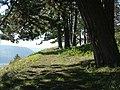 Pfad auf dem Wall , Bopfingen - panoramio.jpg