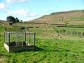Pheasant Rearing, Bilsdale - geograph.org.uk - 11314.jpg