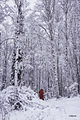 Photographing Alaska (22780683404).jpg