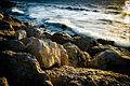 PikiWiki Israel 45291 Beach at Yafo .jpg