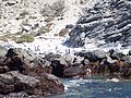 Pinguins at Isla Choros - panoramio.jpg